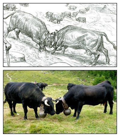 14 les vaches